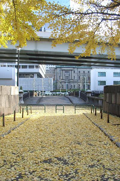 常盤橋公園のイチョウ (橋上からほぼ定点撮影)_b0006870_2244550.jpg