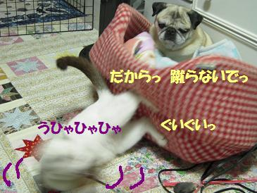 c0139488_16344636.jpg
