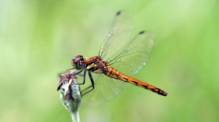 生き物の寿命は脈拍に比例_e0097212_23434111.jpg