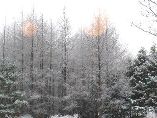 ゆきえさんの背景は雪景色。_f0019247_186427.jpg
