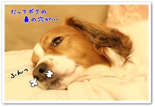 d0013149_002994.jpg