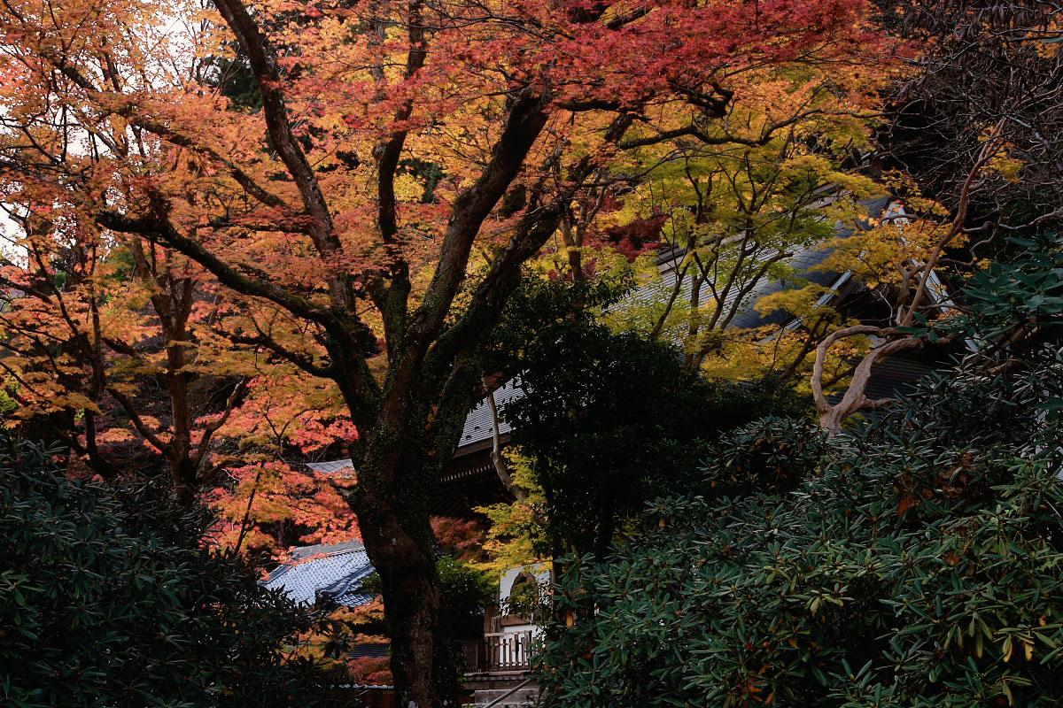 奈良 室生寺 1_f0021869_19515362.jpg