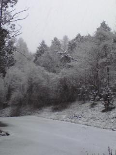 雪です!_b0084194_834365.jpg