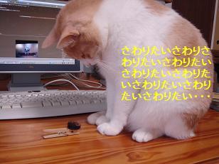 f0131535_16421023.jpg