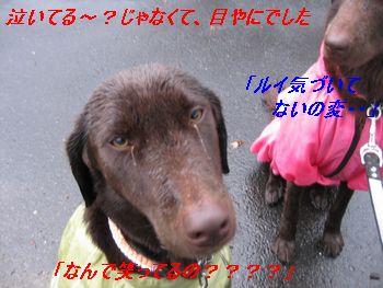 b0148945_21312077.jpg