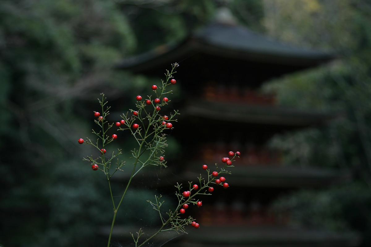 奈良 室生寺 2_f0021869_19544022.jpg