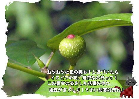 f0137096_21453041.jpg