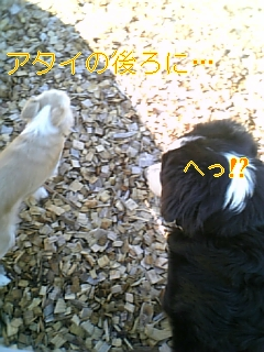 f0148927_18301551.jpg