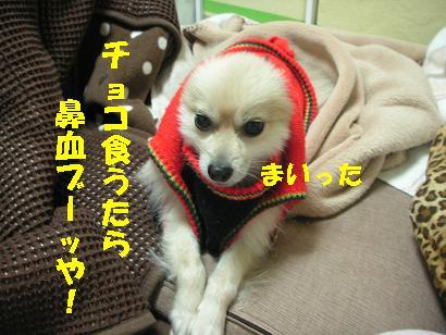 c0179136_0511791.jpg