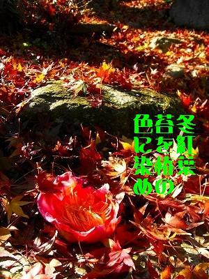 d0098541_2217839.jpg