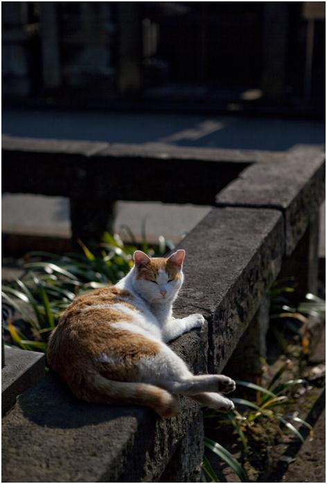 谷中の猫_d0101050_0552480.jpg