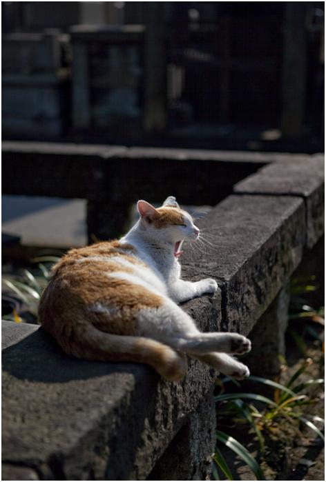 谷中の猫_d0101050_0554767.jpg