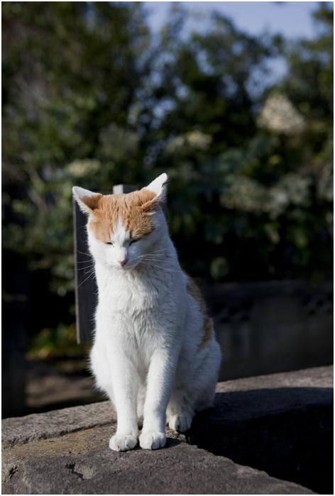谷中の猫_d0101050_056926.jpg