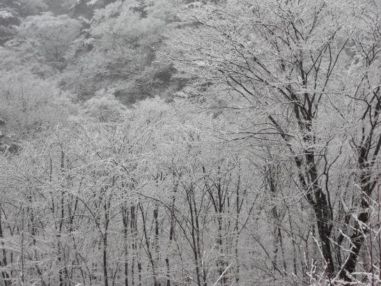 雪の日光。幻想的な美しさ。。。_c0169287_1414991.jpg