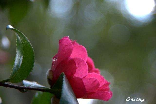 雨上がりの横顔_f0147895_22143266.jpg