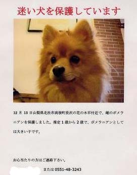 終始おとなっぽい五郎でした。_f0064906_1745346.jpg