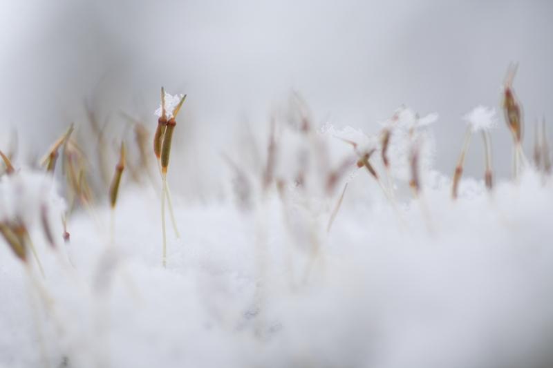 みんな、もらった?雪のプレゼント_f0091207_21111486.jpg