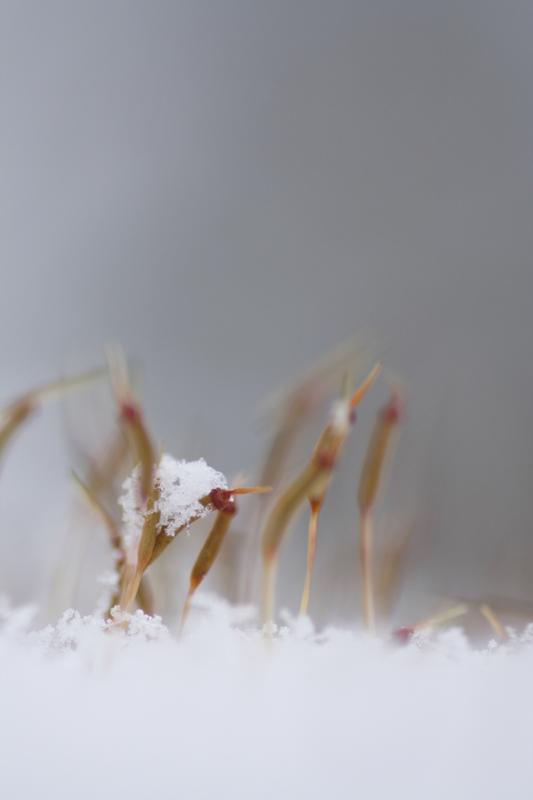 みんな、もらった?雪のプレゼント_f0091207_2195280.jpg