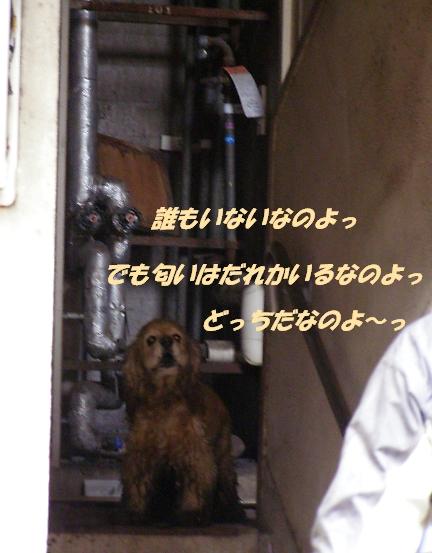 b0067012_1304156.jpg