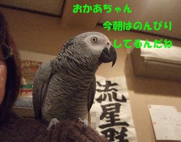 c0133013_14465257.jpg