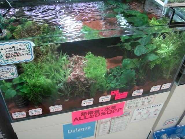 水草・日淡・海水魚_f0189122_17113134.jpg