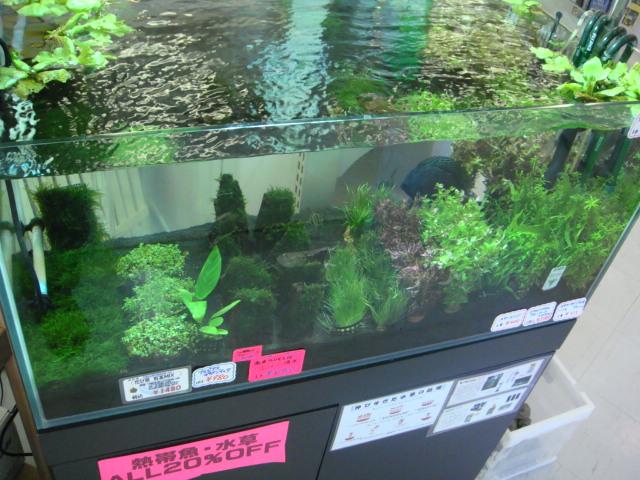 水草・日淡・海水魚_f0189122_17132035.jpg