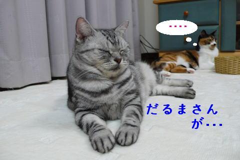 c0096628_21262011.jpg