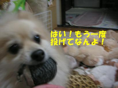 c0179136_0481928.jpg