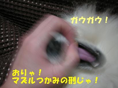 c0179136_0484433.jpg