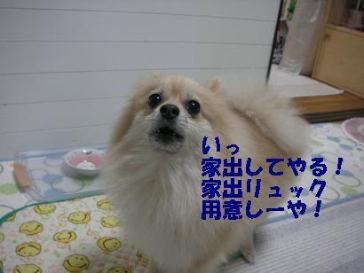 c0179136_0485328.jpg