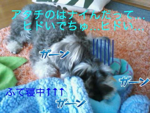 c0177261_1438525.jpg