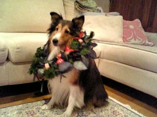 もうすぐクリスマス☆_f0116297_1005074.jpg