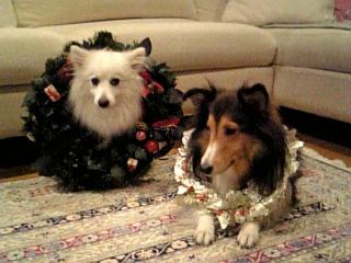 もうすぐクリスマス☆_f0116297_10199.jpg