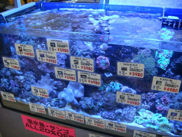 金魚・水草・熱帯魚・海水魚・サンゴ_f0189122_1536502.jpg
