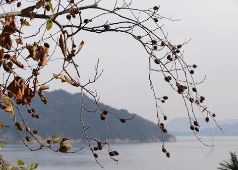 直島の木の実_f0193425_22344777.jpg