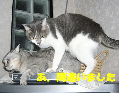 ここのブログは_f0002743_1413218.jpg