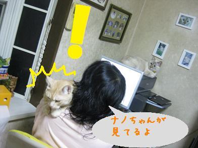 b0151748_1323948.jpg
