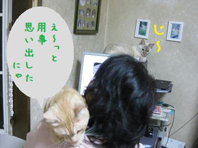 b0151748_133119.jpg