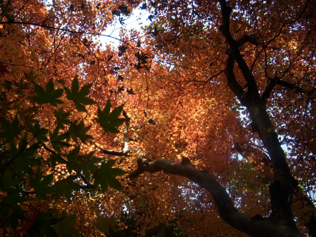 The color of Kyoto_c0156749_212368.jpg