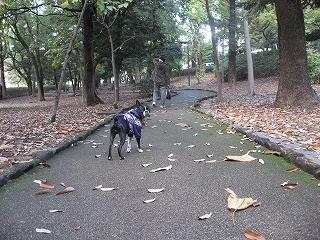 11月の総集編 瑞穂1万歩コース編_f0141516_0332818.jpg