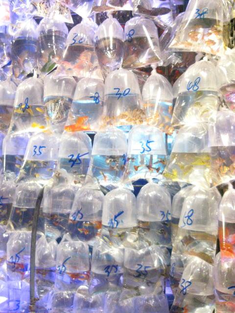 香港紀行3~フリーマーケット~_c0113733_2128294.jpg