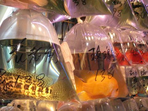 香港紀行3~フリーマーケット~_c0113733_21283232.jpg
