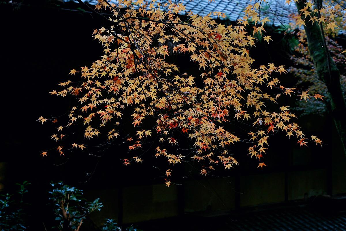 京都 嵐山 2_f0021869_21101868.jpg