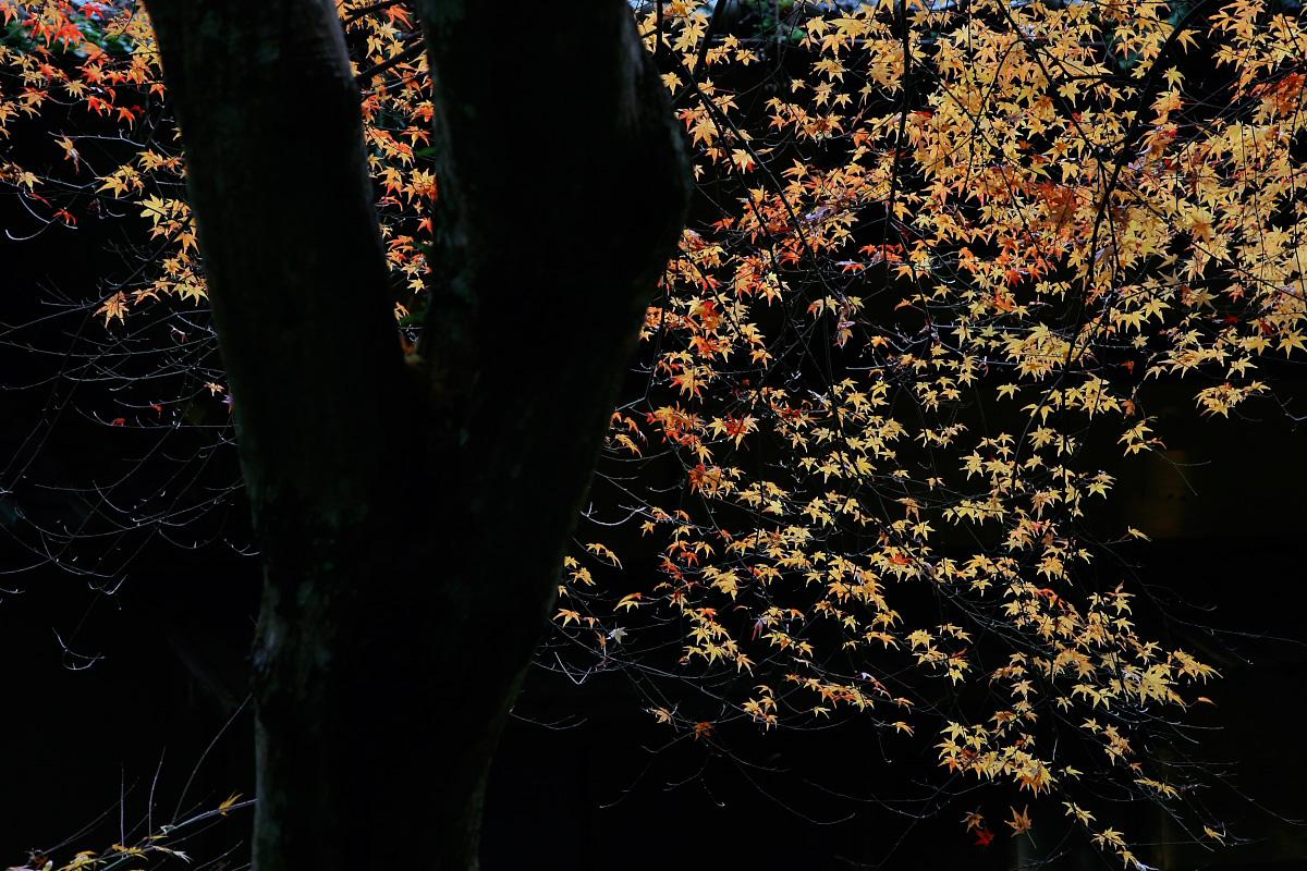 京都 嵐山 2_f0021869_21105017.jpg