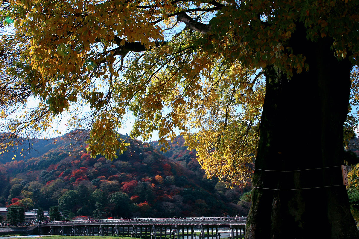 京都 嵐山 2_f0021869_21132296.jpg