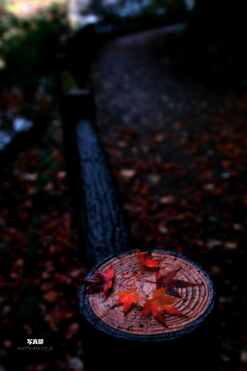 京都 嵐山 2_f0021869_21214331.jpg