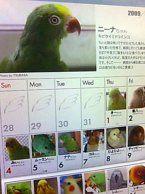 バードアロマセラピー&お知らせ_b0003270_0125394.jpg