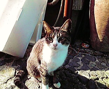 猫が・・・_f0074571_19482921.jpg