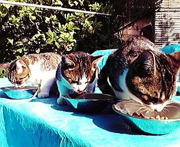 猫が・・・_f0074571_19491742.jpg
