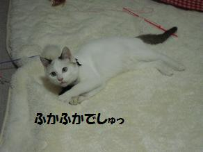 c0139488_1511132.jpg
